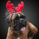 Christmas headbands for Kuschel- & Pets