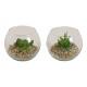 Aloe Vera, műanyag pohár 2- szer szortírozott kisz