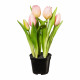 Tulipánok edényben x5 25cm műanyag rózsaszín / róz