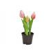 Tulipani in vaso x3 in plastica rosa / rosa (H) 20