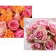 33x33cm 20er Servietten rosas 3 capas