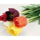 Tulpe mit Regentropfen, farbig sortiert