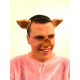 Stel: varkensoren en varkens neus