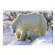 Photo magnet polar bear, 5.5x8cm