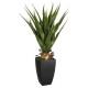 agave pot rechthoek h73, groen