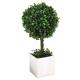 Boxwood ball pot h38, green
