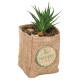 plant jute h12.5 potplant, 4 maal geassorteerd , g