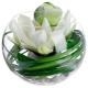 compo lotus vase vr h21, transparent