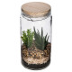 terrarium covered wood d11xh22, 2- times assorted