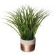 planta verde cim h40, taupe