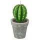 bougie plante 200g, 4-fois assorti, couleurs assor