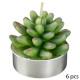 bougie chauffe-plat x6 plante 170g / 210g, 2-fois