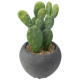 cactus mix pot cim black d6,5, 4- times assorted ,