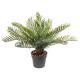 planta de piña h30, verde