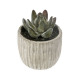 succulente pot cim collect h9, 3-fois assorti, gri