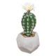 cactus h19 pot ciment, 2-fois assorti, couleurs as