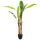 bananenboom dubbele h160, groen