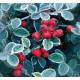 Napkin Berries
