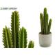 Kaktus Kaktus hohe Dornen 39cm