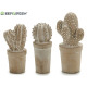 bleached stone cactus 3 times assorted