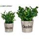 green plant garden pot, 2 times assorted model