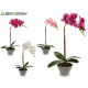43cm gray conical pot orchid assorted 4cl