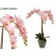 Orquidea rosa Kegel konisch grau Jumbo