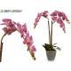 Orchidee lila Blumentopf Conica grau Jumbo
