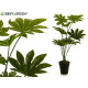 plant green leaves saw