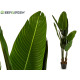plant straight stems leaves tip 150 cm