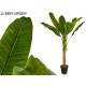 pflanze große Blätter 1 Stiel 125 cm