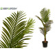 plant thin leaves green tip 110 cm