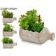 flowerpot bottle green plant 4 times assorted
