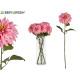 großer rosa Dahlienblumenzweig