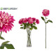 Zweigblume lila Dahlie