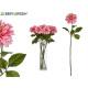 Zweigblume rosa Dahlie