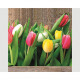 Premium Servietten 'Tulpen bunt' 20er 33x33cm