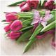 Napkins Premium 20x 33x33cm, 3 ply tulips