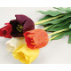 Tulipano con gocce di pioggia, colorato assortito