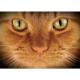 Placemat gyömbér macska szeme