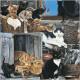 CS Company of Cats card