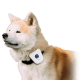 BarkYap necklace for dogs against barking